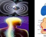 Từ trường trong Máy vật lý trị liệu đa năng MPT8-12