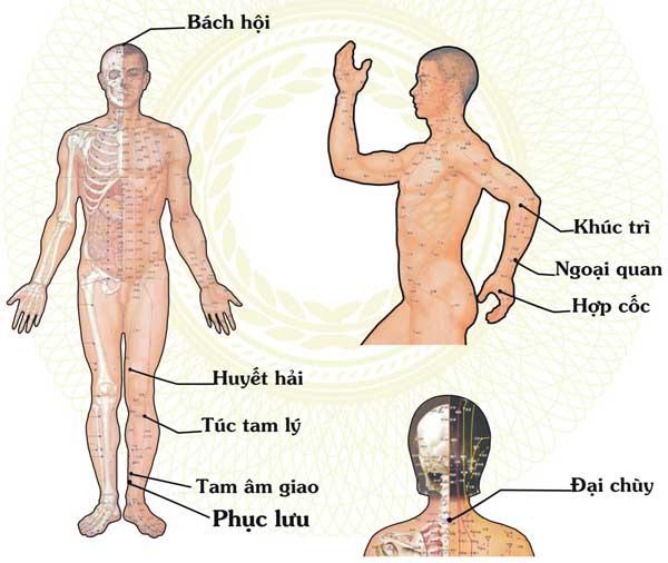 các huyệt đạo của cơ thể 6