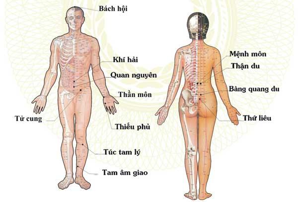 các huyệt đạo trên cơ thể 7